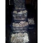 Выращиваем грибы