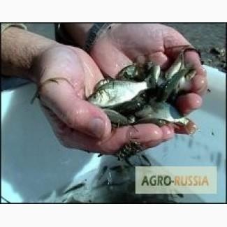 Мальки рыб и живец. Раки