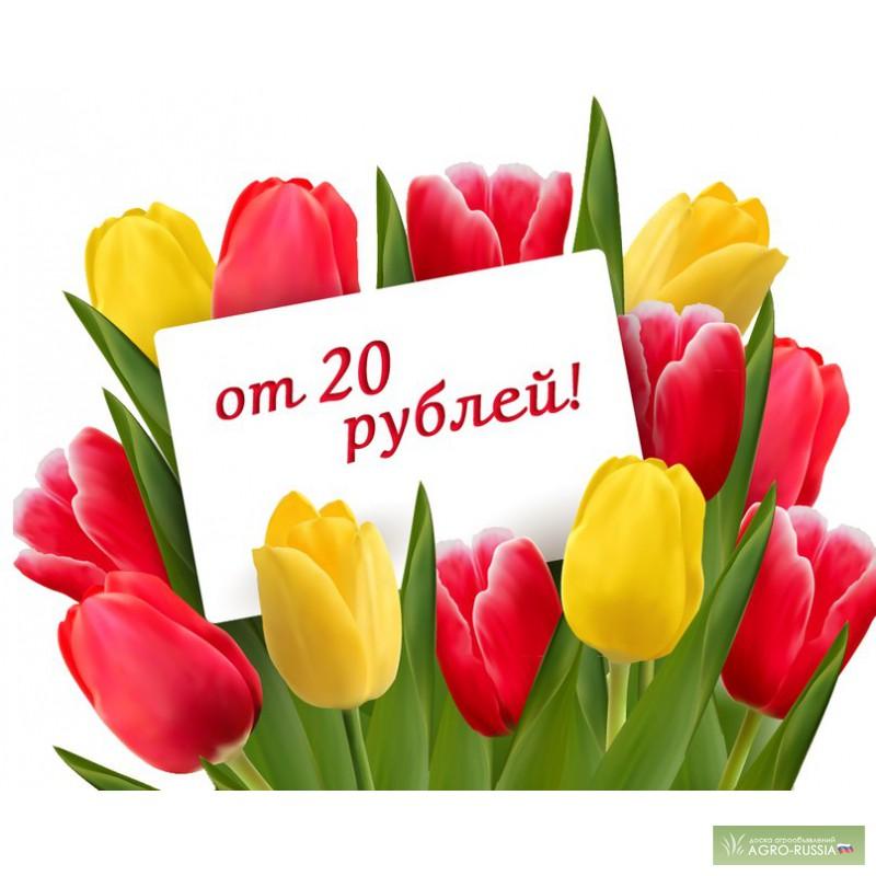 Тюльпаны мелким оптом купить подарок девушке сына на 8 марта