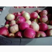 Яблоки оптом Айдаред, Голден