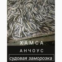 Продам ХАМСУ. Черноморская, судовая заморозка