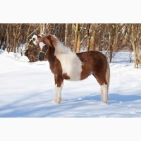 Пони-ферма. пони кобылки 2020гр