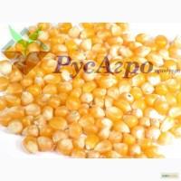 Кукуруза фуражная продовольственная