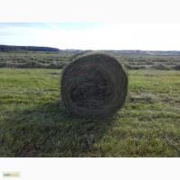 Сено луговое(разнотравье) в рулонах по 250 кг и в тюках по 20кг