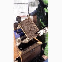 Пчелы на высадку