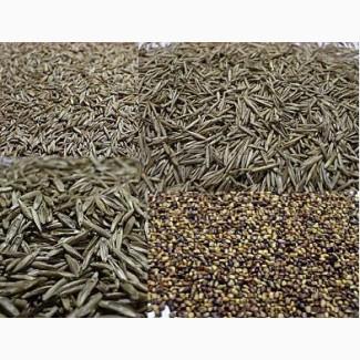 Продаем Райграс и другие многолетние семена злаковых и бобовых культур.Газонные травосмеси