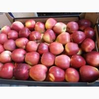Продаем оптом яблоки Кримсон по цене от производителя