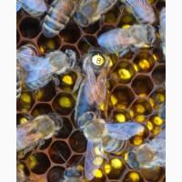 Пчеломатки из ставропольского края