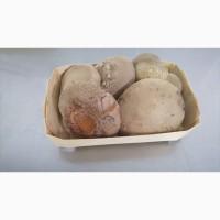 Свежие грибы шиитаке