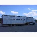 Заказ на перевозки скота, скотовозы