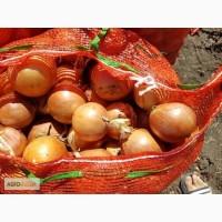 Продаем лук оптом, сорт Боско, Халцедон