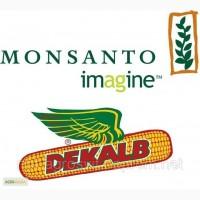 Семена кукурузы MONSANTO