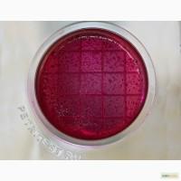 Продам микробиологические тесты на кишечную палочку