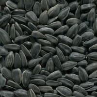 Семена Подсолнечника Крупноплодного «ДОБРЫНЯ» к посевной 2021