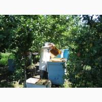 Продаю семьи пчел, отводки, пчелопакеты, ульи с доставкой, консультирую, обучаю