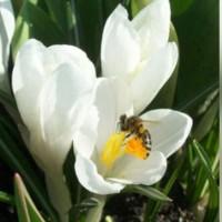 Оптово-розничный магазин по продаже товаров для пчеловодства