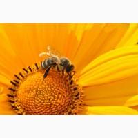 Пчелопакеты Карника с бесплатной доставкой