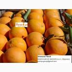 Апельсины МАРОККО: Марок Лэйт/ Салустиана - урожай 2016