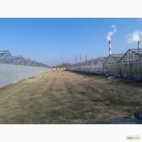 Продам каркасы промышленных оцинкованных теплиц Антрацит 3 га