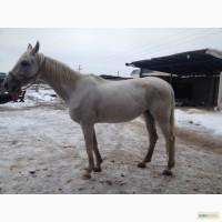 Продам лошадь Орловская рысистая