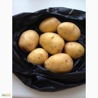 Оптовые поставки овощей