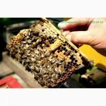 Свежий мёд: горное разнотравье, липа