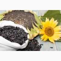 Семена подсолнечника (гибриды Clearfield)