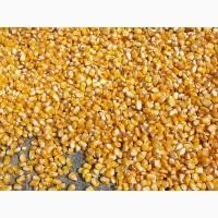 Кукуруза 50000 тонн