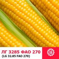 ЛГ 3285 (ФАО 270) гибрид кукурузы ЛИМАГРЕЙН (Limagrain)