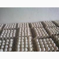 Продам яйцо утиное инкубационное утка STAR-53