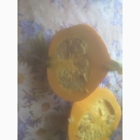 Тыква orange sunner