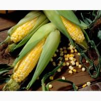 Гибриды семена кукурузы ДКС 3511 Монсанта, Monsanto
