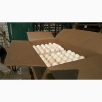 Продаем яйцо куриное фермерское (С1)