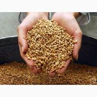 Продам пшеницу оптовая цена от 225$ (CIF)