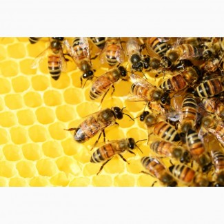 Пчелопакеты на 2021 год
