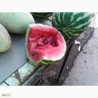 Арбуз Овощи