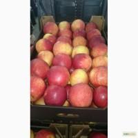 Продам яблоки оптом в минске