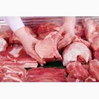 Закупаем в большом объеме говядину