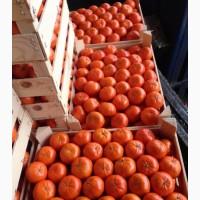 Реализуем оптовую продажу мандарин