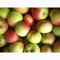 Яблоки на пром. переработку