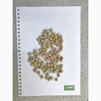 Продажа семян нута Краснокутский-36, РС-1