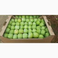 Продам Яблоко, сорт яблока Семеренко и Айдаред калибр 75