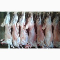 Баранина халяль. Экспорт мяса