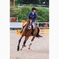 Продаётся отличная спортивная лошадь