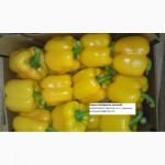 Перец сладкий КАЛИФОРНИЯ (зеленый / красный / желтый / оранжевый), БОЛГАРСКИЙ, МАРОККО
