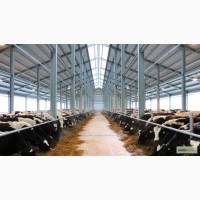 Строительство коровника молочной фермы