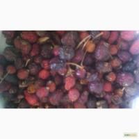 Шиповник плоды сухие