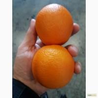Апельсин оптом от производителя