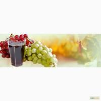 Концентрированный сок белого винограда 65 % оптом