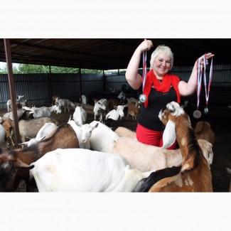 Продажа коз